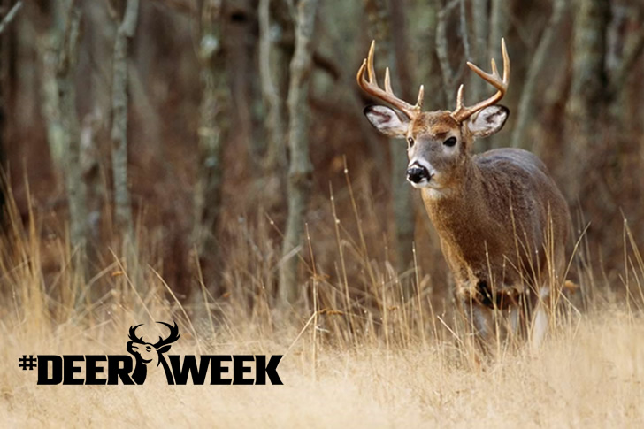 Deer Week To Deliver 7 Nights of Epic Hunts October 15th to 21st